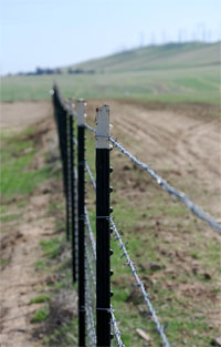 cuento-monpetit-barbed-wire.jpg